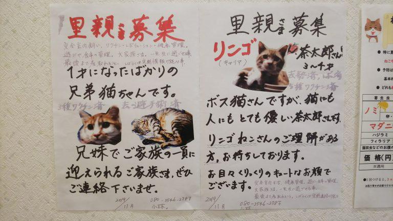 猫:里親募集